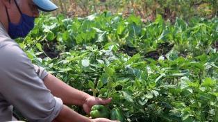 Una huerta comunitaria en el corazón de Formosa para alimentar a todos