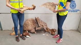 La Aduana frustró el contrabando de 100 piezas de fósiles de dinosaurios a España