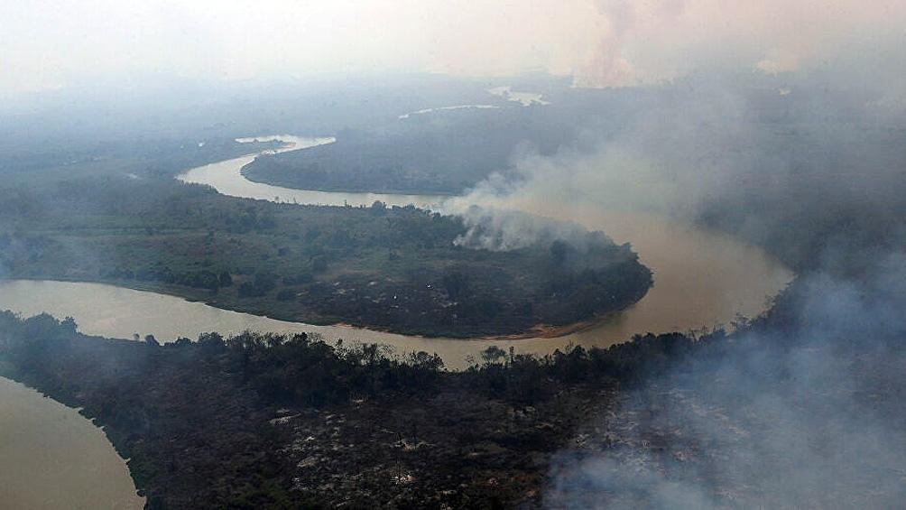 Autoridades y organizaciones no gubernamentales trabajan para rescatar a los yaguaretés.