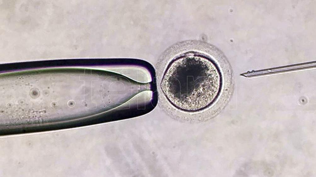 Los embriones fueron cultivados hasta el día siete, que es a partir de cuándo se puede transferir.