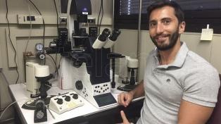 """La primera clonación de cebras en laboratorio permite pensar en """"rescatar"""" subespecies extintas"""