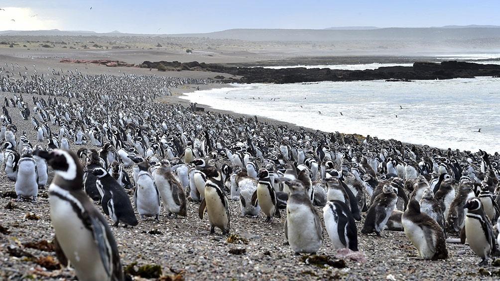 Punta Tombo estará abierta por ahora de lunes a viernes de 8 a 18