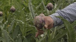 Las lluvias traen alivio a la agricultura, en particular a los cultivos de la zona núcleo
