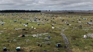 Larroque aseguró que en los terrenos ocupados quedan menos de 150 personas