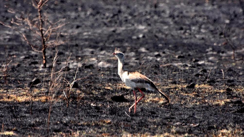 Las llamas amenazan la fauna, la flora y hasta las viviendas de la zona más cercana.