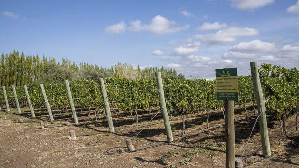 El gobierno provincial avanza en la creación de una Ruta del Vino.