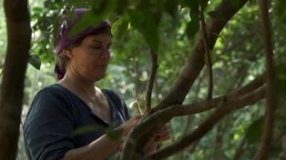Filmes hacia una vida sostenible en el Science Film Festival