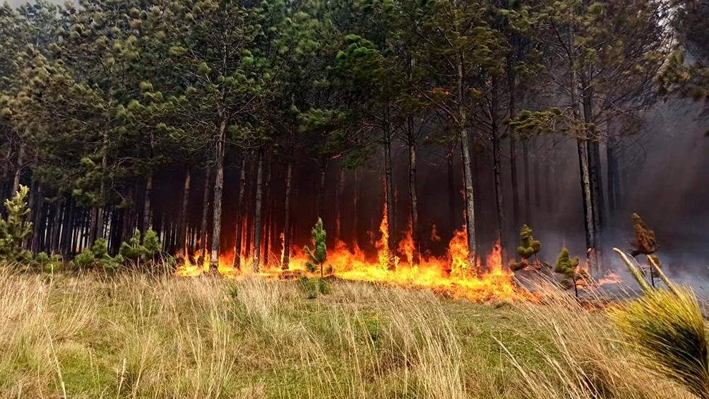 En el resto del país se lograron contener las llamas, según el reporte del Servicio Nacional del Manejo del Fuego.