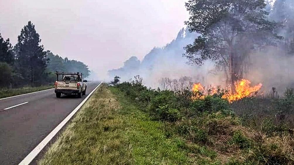 Los incendios han provocados enormes pérdidas de flora y fauna autóctona.