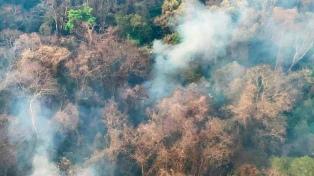 Los incendios forestales ya arrasaron casi mil hectáreas del Parque Nacional Calilegua en Jujuy