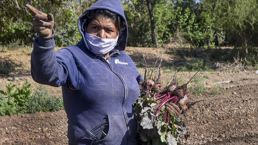 Una trabajadora rural en Córdoba.