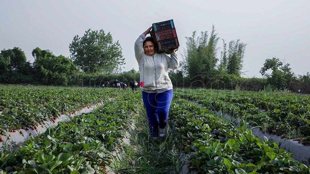 La mujer es central en la producción hortícola.
