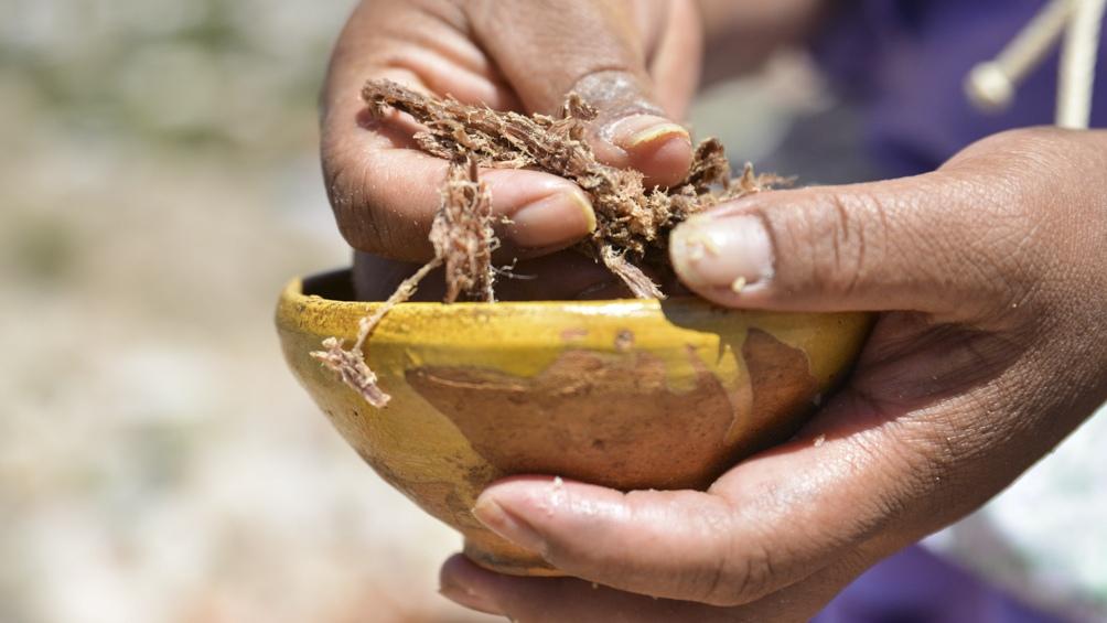 Campesinas: pilares fundamentales de la producción y la vida rural