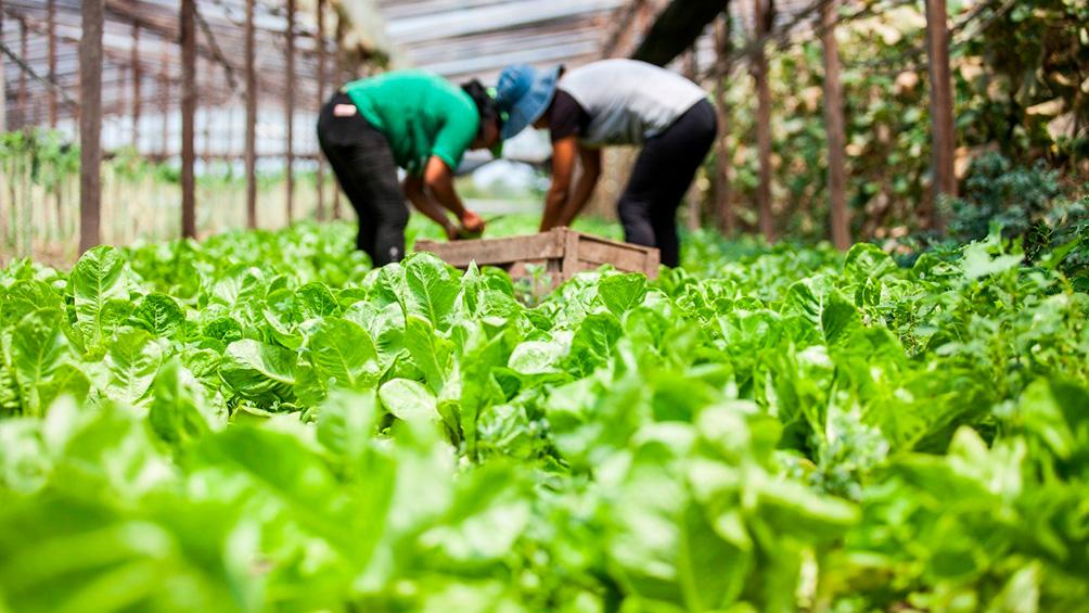 Una opción para comprar productos agroecológicos a precios populares