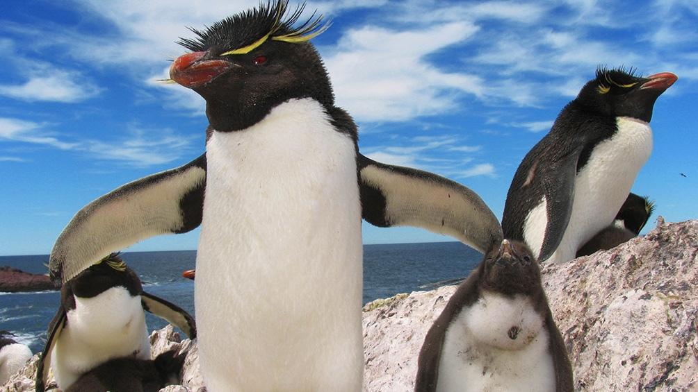 Pingüinos en Puerto Deseado