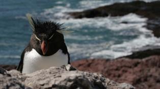 Puerto Deseado impulsa una fuerte propuesta de turismo rural con vistas a la apertura