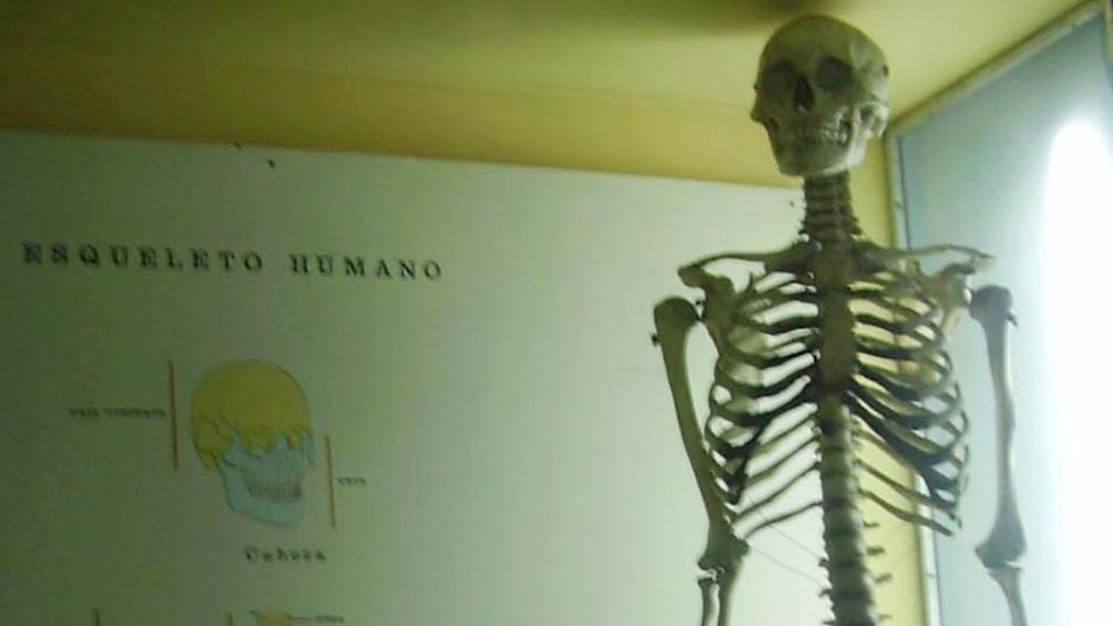 Restos óseos del joven exhibidos en las vitrinas del museo platense