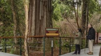 Los bosques de alerces son la mayor atracción del Parque.