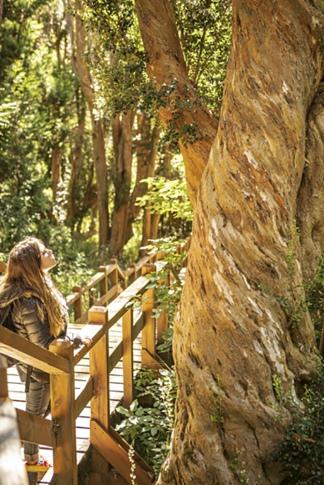 El parque tiene 12 kilómetros de senderos entre cientos de ejemplares de arrayanes.