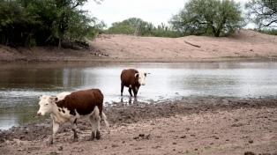 La sequía complica el panorama agrícolo-ganadero en varias provincias