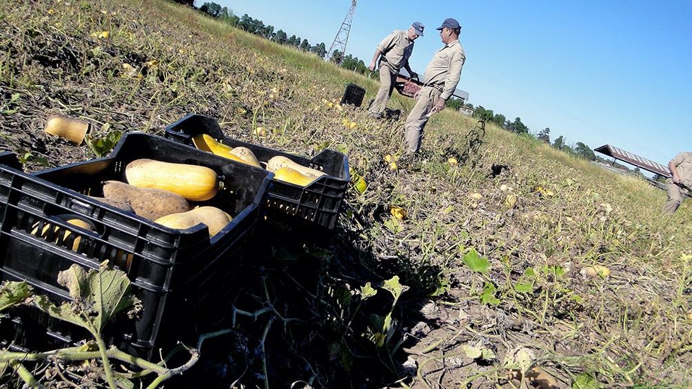 Lanzarán la Mesa Agroalimentaria Argentina