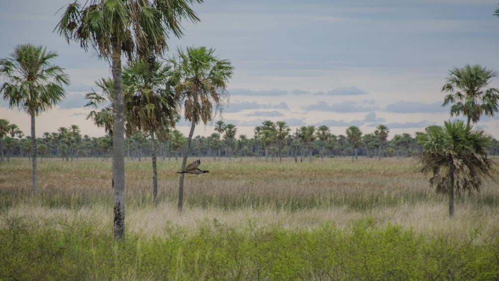 Cuidar los bosques puro de quebracho colorado chaqueño fue uno de los motivos de creación del área protegida.