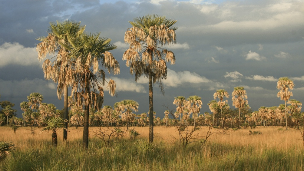 El paisaje característico es un extenso pastizal con palmares de caranday e isletas de monte, inmersos en él.