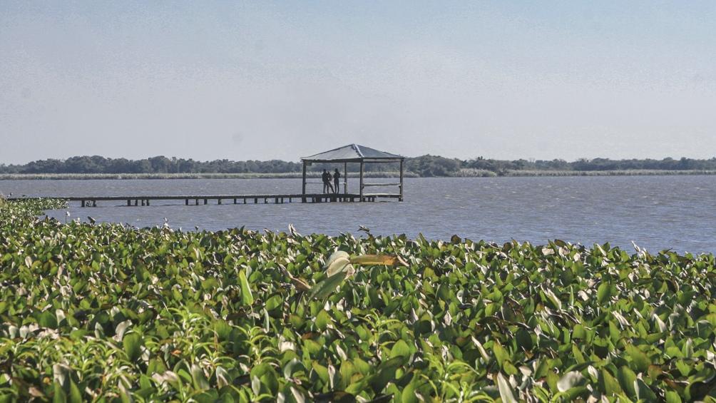 En las zonas inundables hay esteros, cañadas y lagunas, con vegetación flotante y palustre como el huajó, el pirí y el camalote.