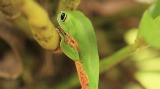 Especies casi extinguidas están siendo salvadas en la reserva.