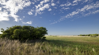 El pastizal pampeano fue en gran parte eliminado para usarlo en agricultura.