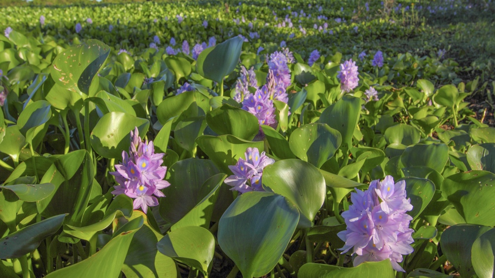 La vegetación está dominada por hierbas como canutillos, pajonales y flores silvestres.