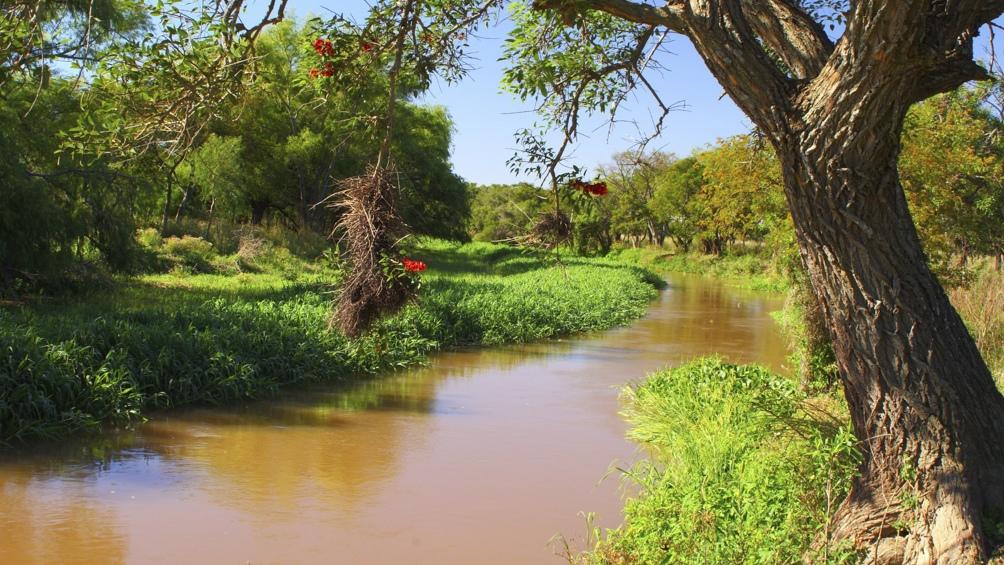 En los arroyos y el río hay sábalos, dorados, surubíes y mojarras (se han registrado 185 especies de peces).