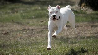 Un perro dogo mató a una nena de 2 años en su casa, en Ensenada