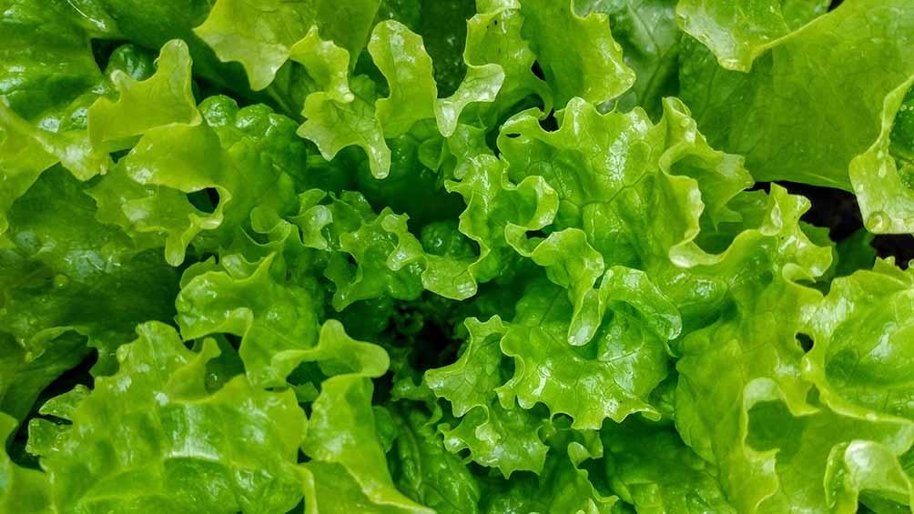 "Cerdá aboga por un ""cambio de paradigma"" en el modelo de producción agropecuaria."
