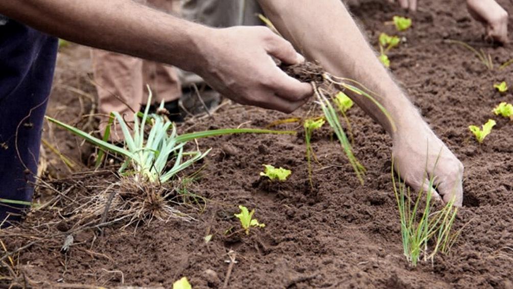 Agroecología, una producción sin pesticidas ni fertilizantes.