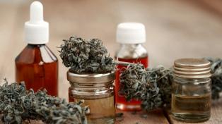 El Gobierno autoriza el autocultivo de cannabis con fines medicinales y fomenta la investigación