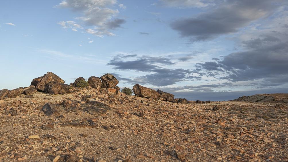 Hace 150 millones de años, la zona era un bosque de araucarias.