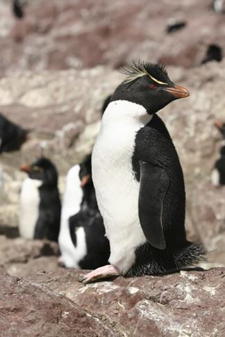 Hay unas 24 mil parejas de pingüinos.