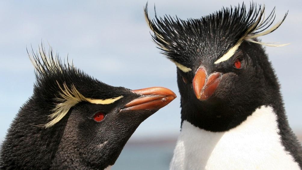 Miles de pingüinos de Magallanes recalan en la isla para nidificar.