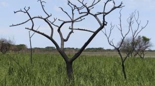 Científicos del Observatorio Ambiental trabajan en el relevamiento de la biodiversidad