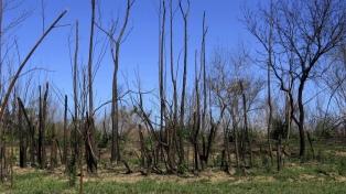 """Alertan sobre la """"pérdida de fertilidad"""" en suelos afectados por incendios en humedales"""