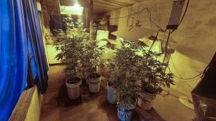 Secuestran 55 plantas de marihuana en un sótano, donde funcionaba un invernadero
