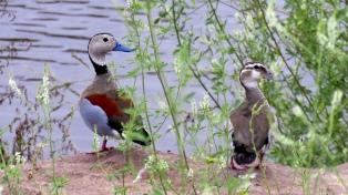 Construyen un lago artificial para atraer aves silvestres que huyen de incendios
