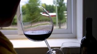 Desarrollan bacterias para reducir la acidez y mejorar el aroma de los vinos tintos