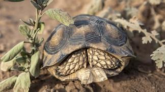 La tortuga es uno de los habitantes del monte.