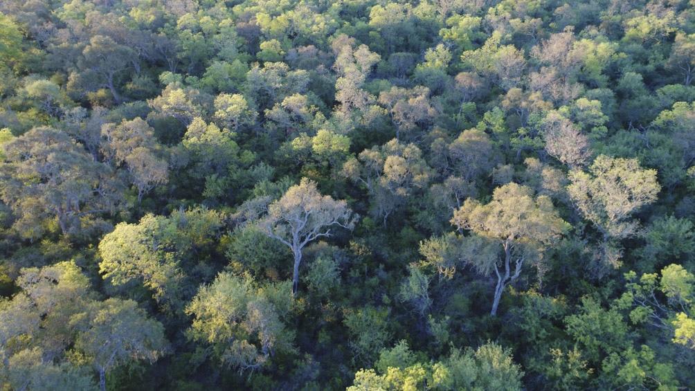 Copo es uno de los últimos reductos de quebrachales. En el siglo XX se talaron más de 170 millones de toneladas de este árbol.