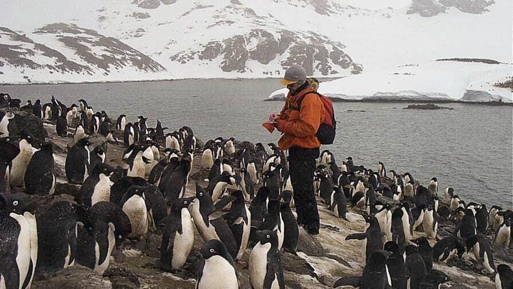 Una de las pingüineras de la Base Orcadas, donde estuvo 14 meses.