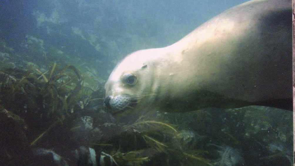 Durante la investigación, loa científicos avistaron mamíferos marinos en los parques nacionales.