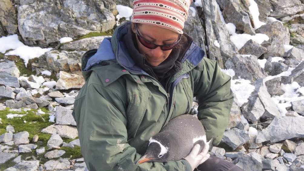 Mercedes Santos, bióloga y doctora en Ciencias Naturales, dedicó gran parte de su carrera al estudio de pingüinos.