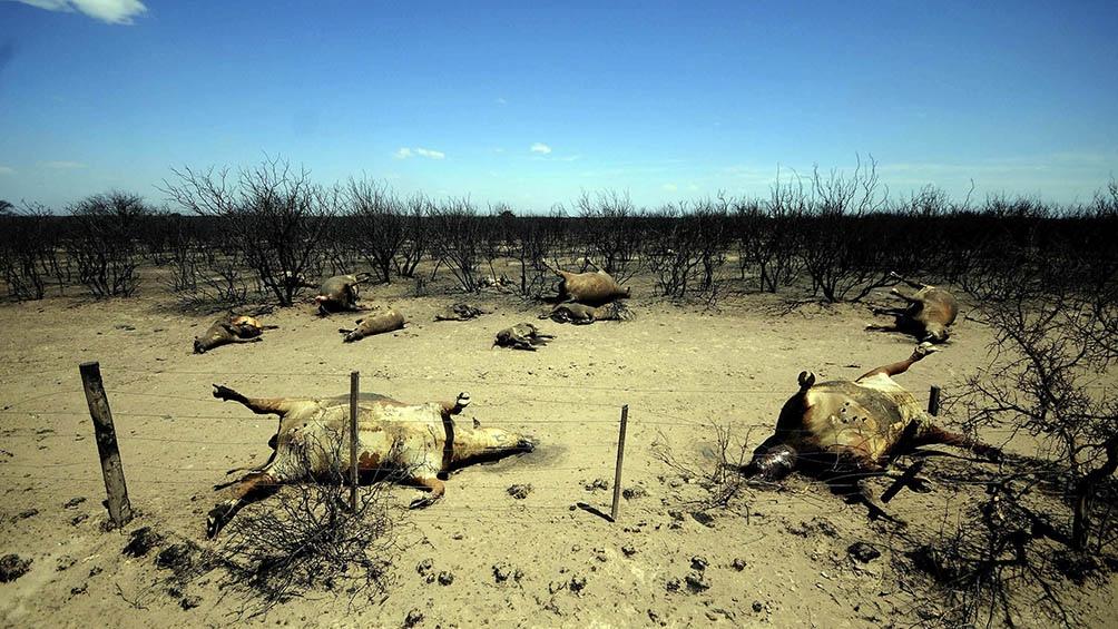 Un millón de especies, de entre un total estimado de ocho millones, están condenadas a extinguirse.